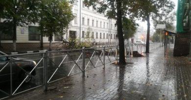 В центре Казани упавшее дерево перекрыло движение