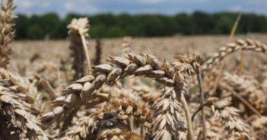 Президент НСА: инвестиции государства в АПК должны быть защищены агрострахованием