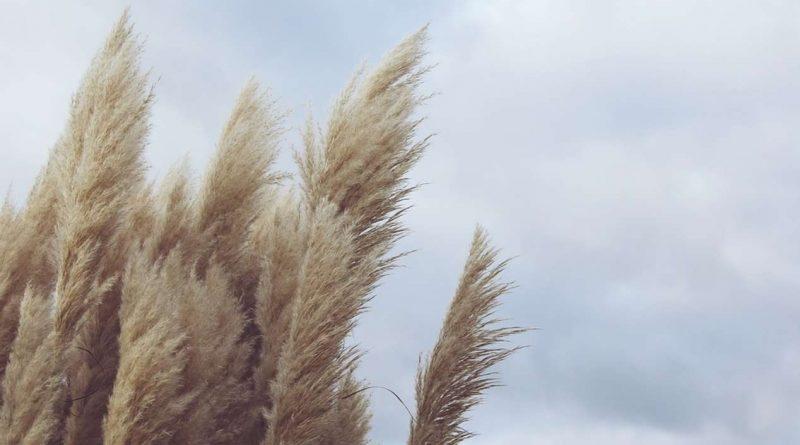 Итоги полугодия указывают на отсутствие у регионов стимулов к развитию агрострахования