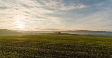 Тамбовская область будет стимулировать агрострахование