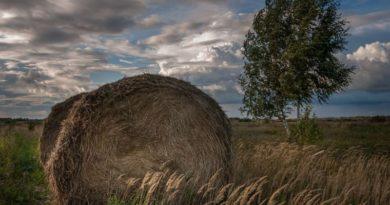 В ряде регионов Поволжья высока вероятность потерь озимых сельхозкультур