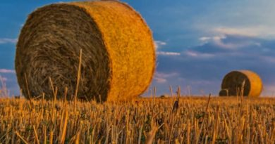 НСА: Аграрный комитет Госдумы рекомендовал принять во II чтении  изменения в закон об агростраховании