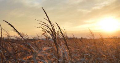 Аграрные регионы Юга и Центра подходят к зиме со сниженным запасом влаги в почве