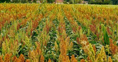 Агрострахование вошло в приоритеты Межпарламентской ассамблеи стран СНГ