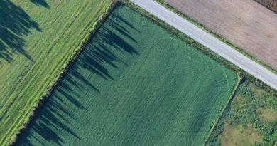 Корней Биждов: аграрии 15 регионов России ежегодно страхуют от 50 до 300 тыс. га посевов  сахарной свеклы