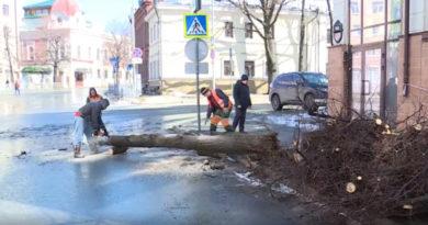 В центре Казани упавшее дерево перегородило дорогу