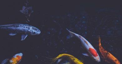 К. Биждов: агростраховщики готовы к страхованию аквакультуры