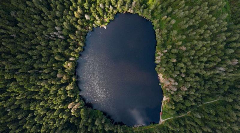 К.Биждов: инициатива НСА по страхованию лесов вызвала интерес и поддержку в регионах