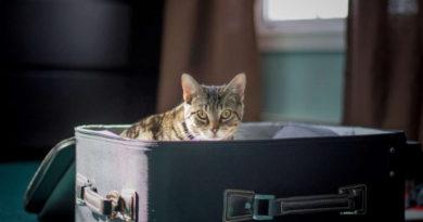СК «Согласие» прокотировала котов-путешественников