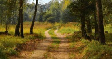 Действуют ли ПДД в лесу и на полях?