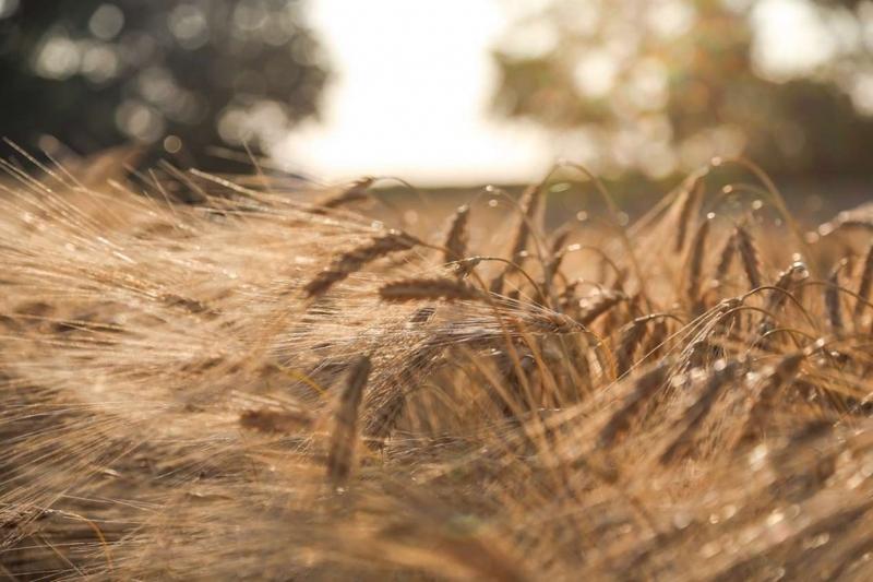 Принятие мер по восстановлению системы агрострахования позволит охватить до 30% посевов к 2021 г.