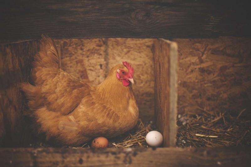НСА: возмещение убытков в 50,5 млн руб. Пензенской птицефабрике дополнит перечень крупных выплат агростраховщиков