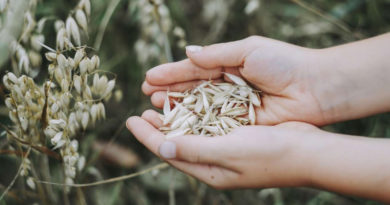 К. Биждов: в 2018 агрострахование развивалось в 74 субъектах РФ, 80% рынка сконцентрировано в 20 ведущих регионах