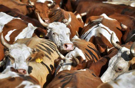 Биф а-ля рюс — теперь в Китае. Россельхознадзор получил разрешение на поставку говядины в КНР