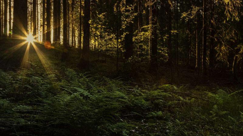К.Биждов: в стратегии развития лесов России до 2030 года необходимо предусмотреть инструменты страховой защиты