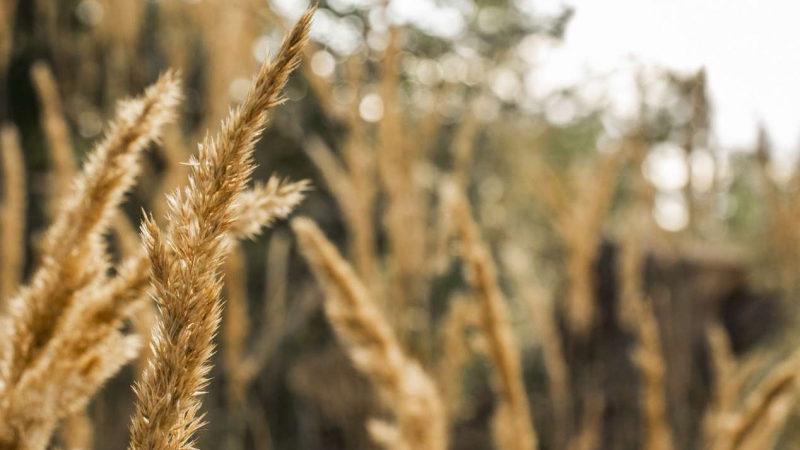 НСА: по итогам ярового сева Омская область стала лидером среди всех регионов страны по застрахованным посевным площадям
