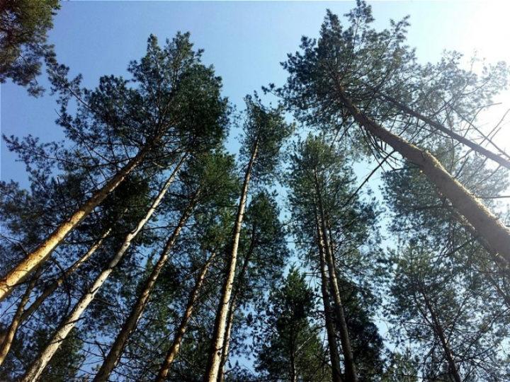В Татарстане особый противопожарный режим продлен до 26 мая