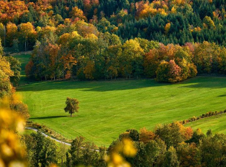 НСА и Центр компетенций развития сельхозкооперации Ярославской области объединят усилия по развитию агрострахования