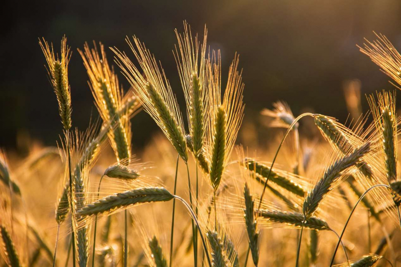 НСА и Правительство Бурятии обсудили возможности максимального охвата страхованием посевов в республике